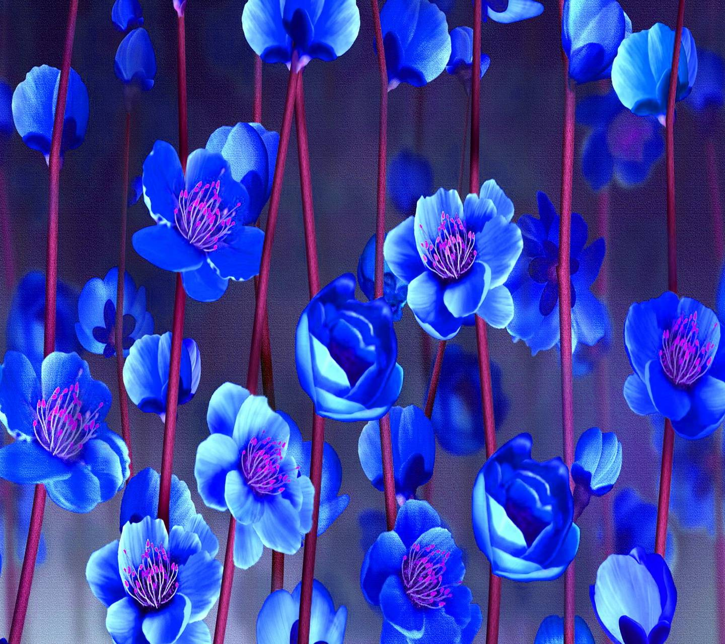 Blue Sakura Flowers