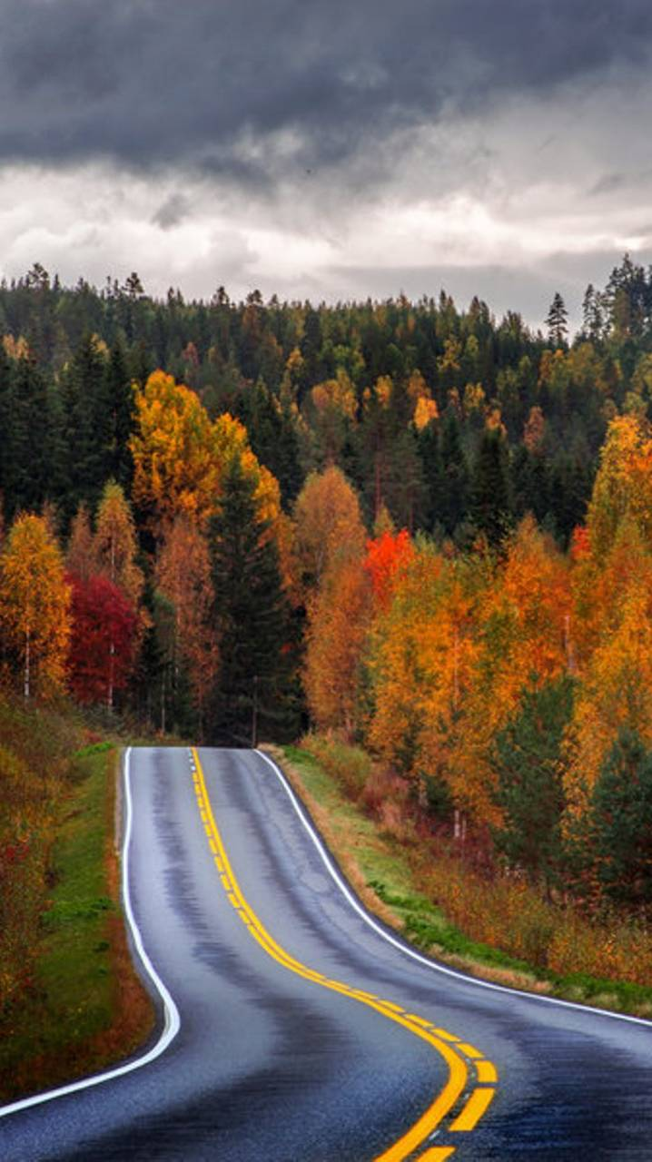 Autumn Road Wallpaper By Xhani Rm O ZEDGETM