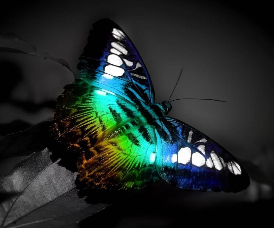 Butterfly Windows