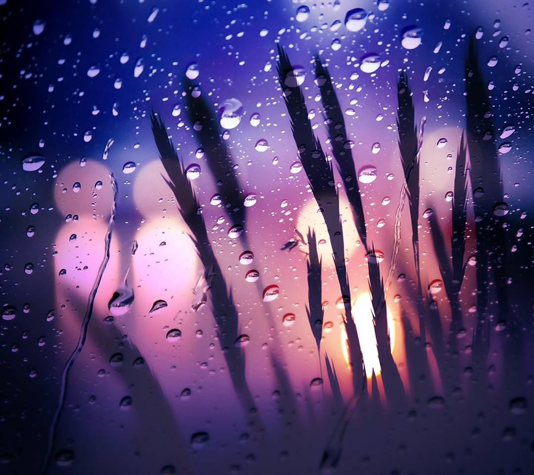 rainy nature hd