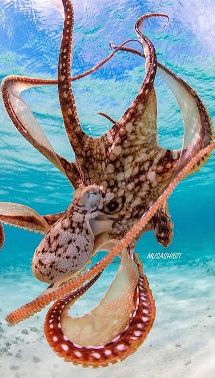 Pretty octopus
