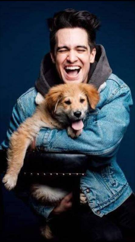 Brendon urie w dog