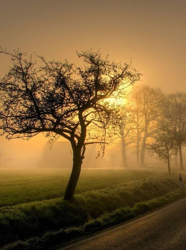 Set Fog