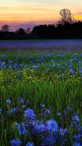 Blue  Yellow Flowers