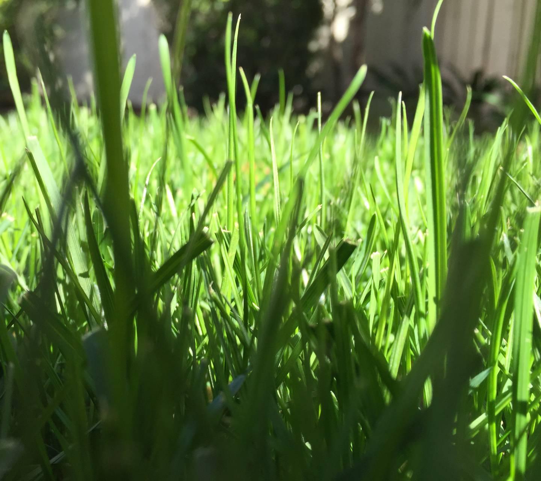 Graden grass