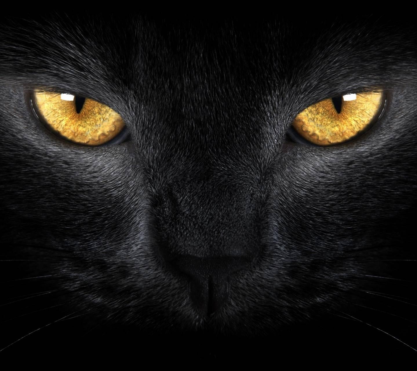 Blak Cat