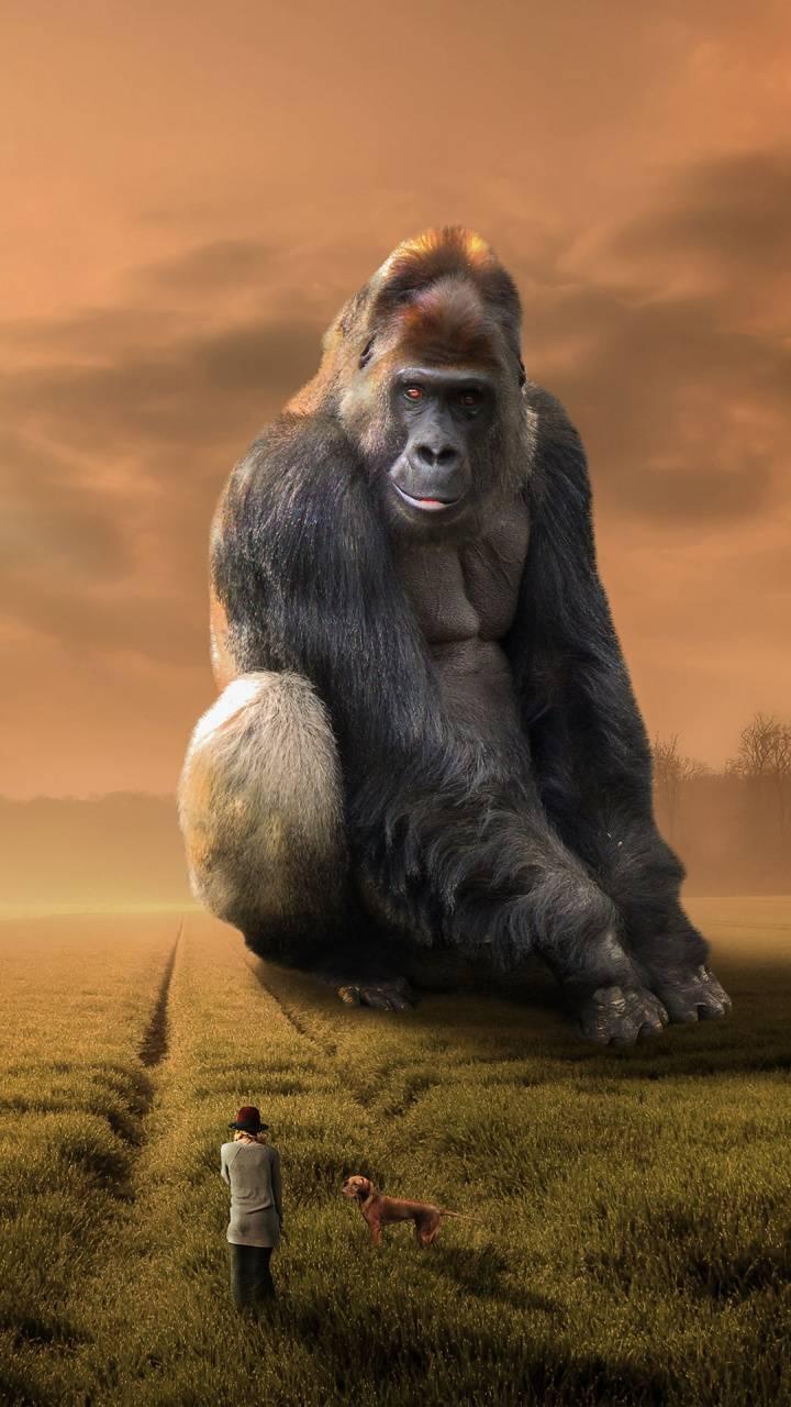 Gorilla Dream