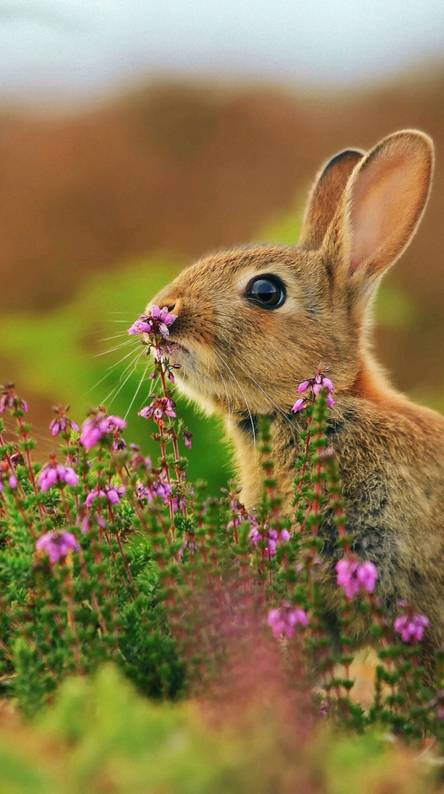 Cute Rabbit Wallpapers Free By Zedge