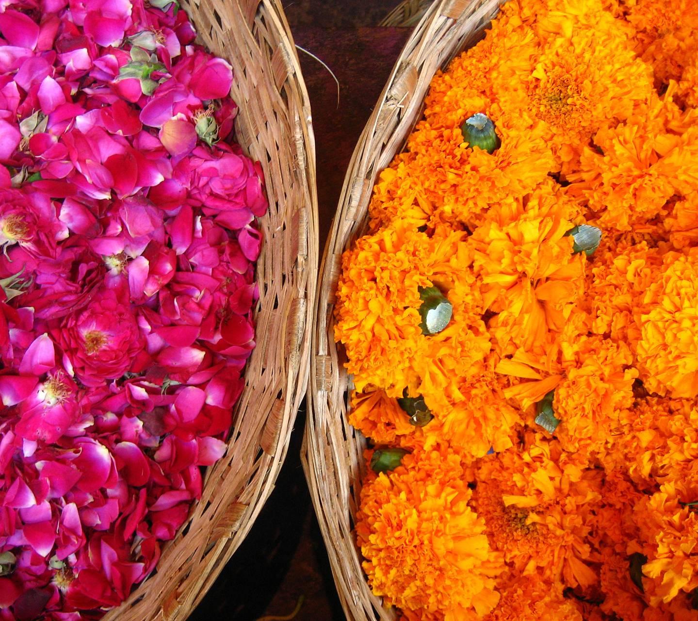 India Color 11