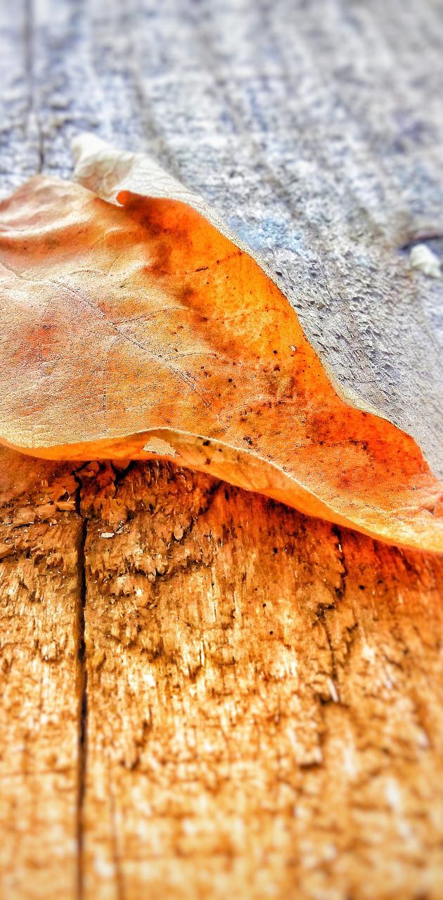 Folha-Leaf