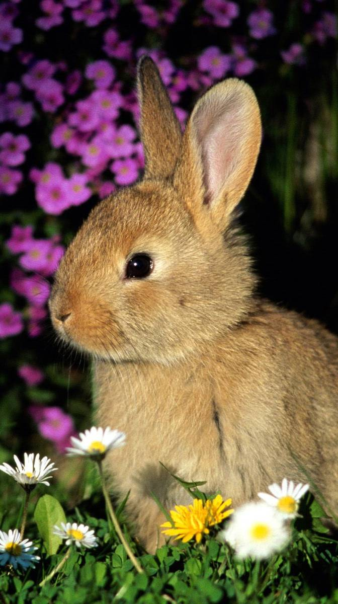 Nice Rabbit