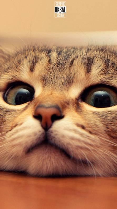 CAT KEDI ABSTRACT