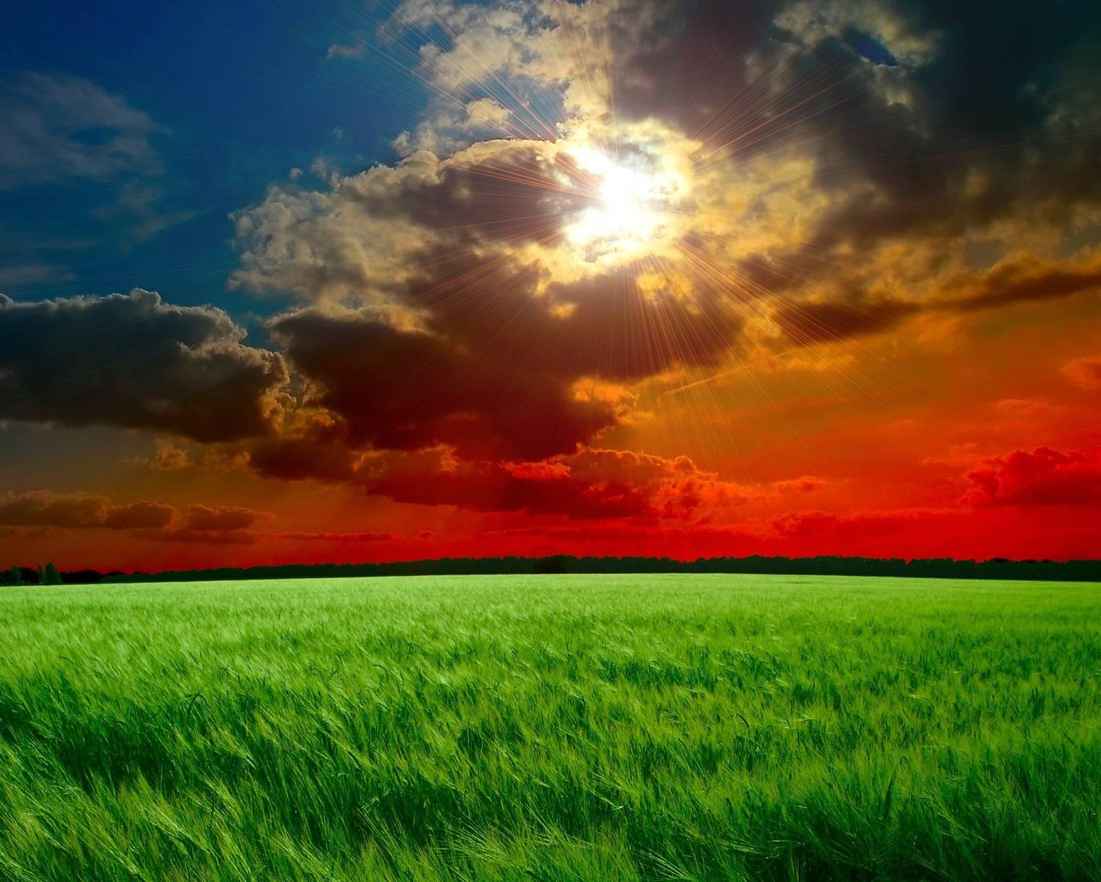 Landscape Grass