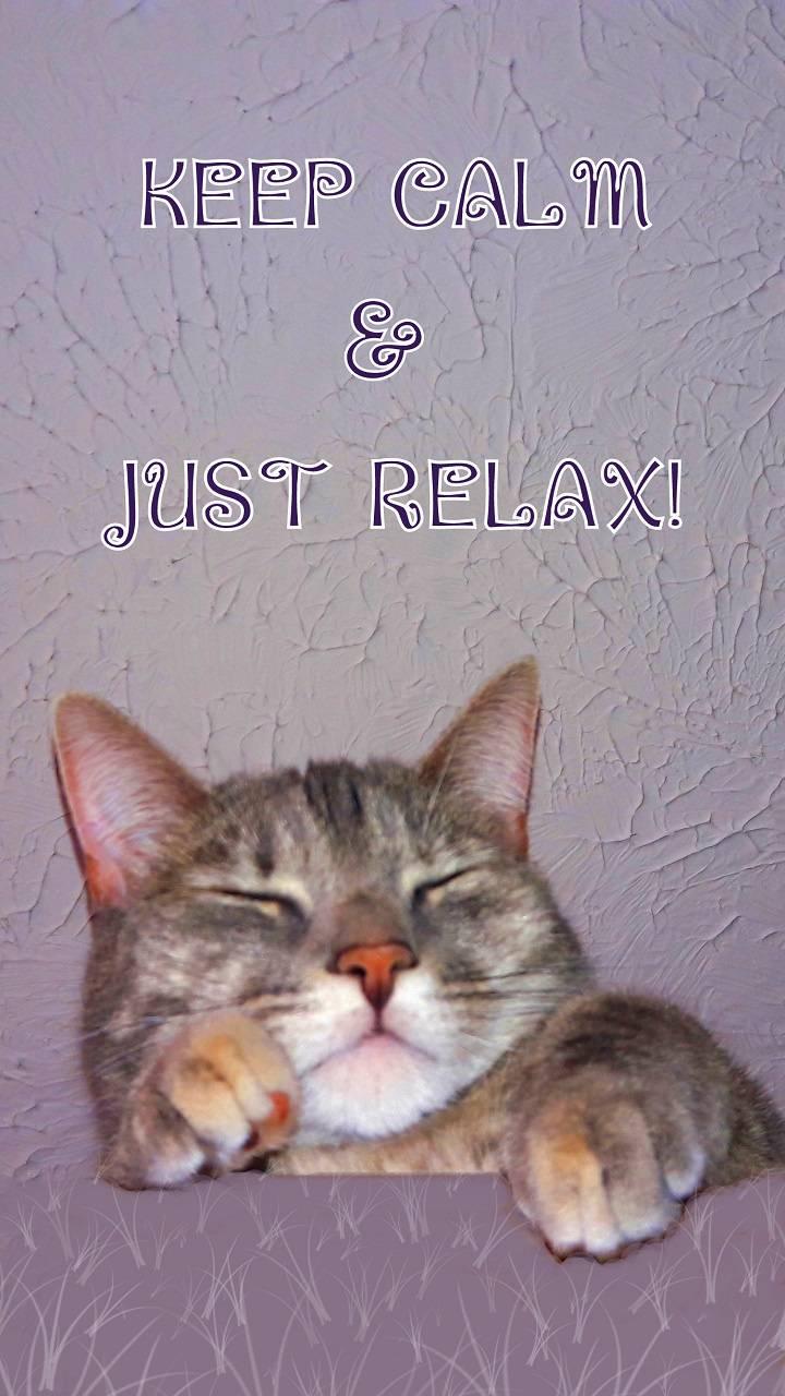 Calm Relax Cat