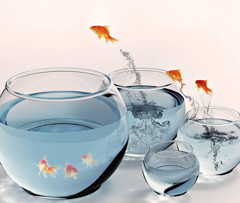 Gold Fish Hd