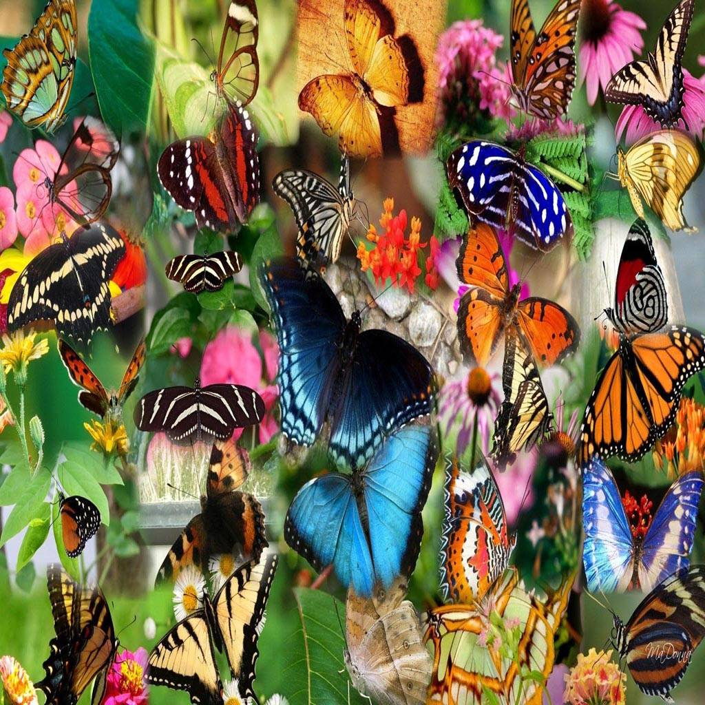 Collage butterfly