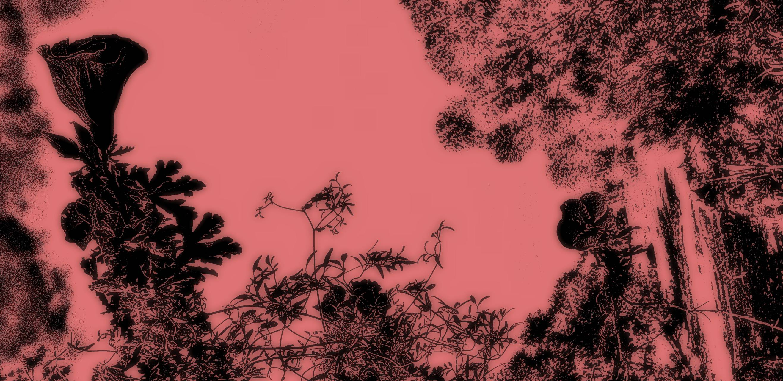 Pink nature print