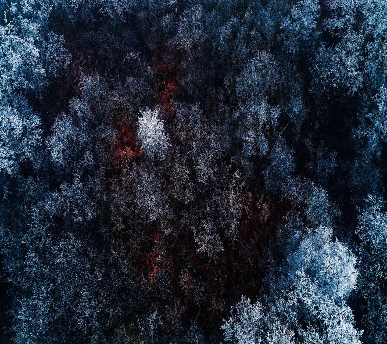 Frozen Forest 4k