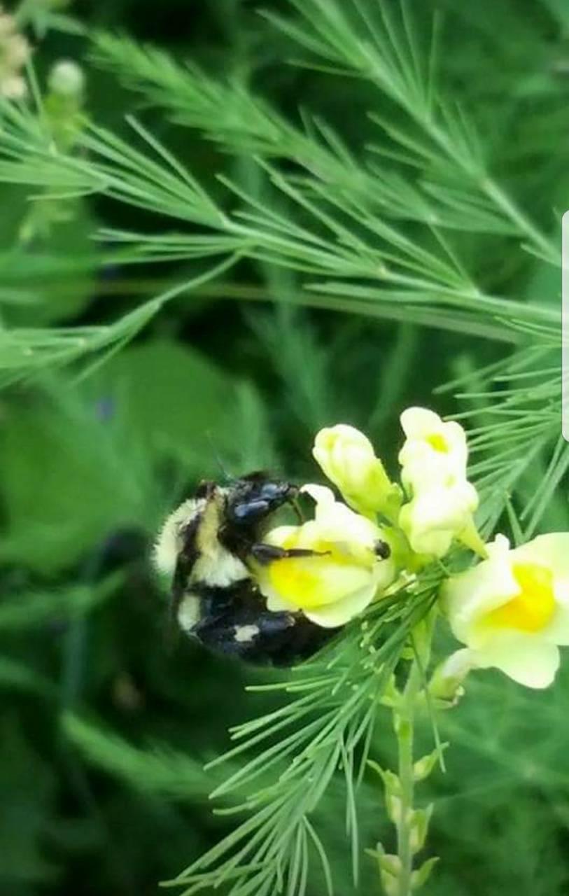 Snappy Bee
