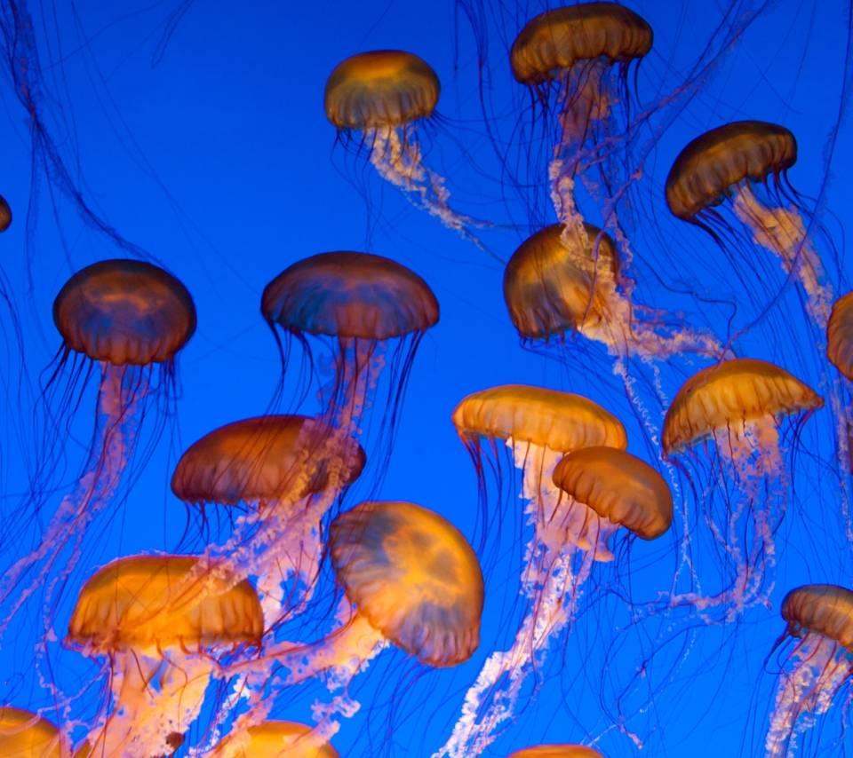 Jellyfish 5