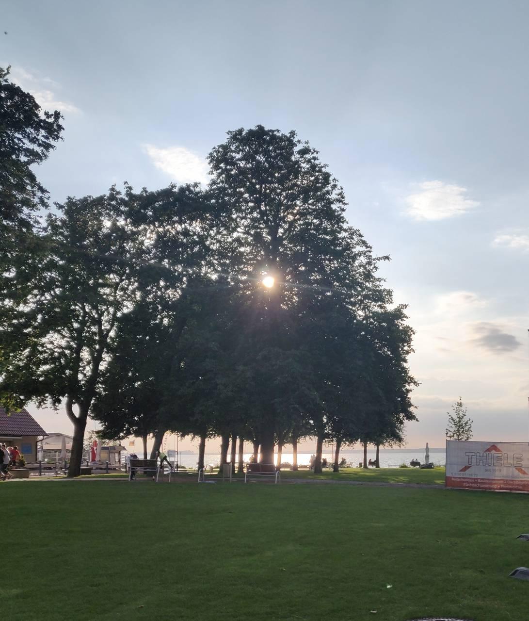 Glowing sun tree