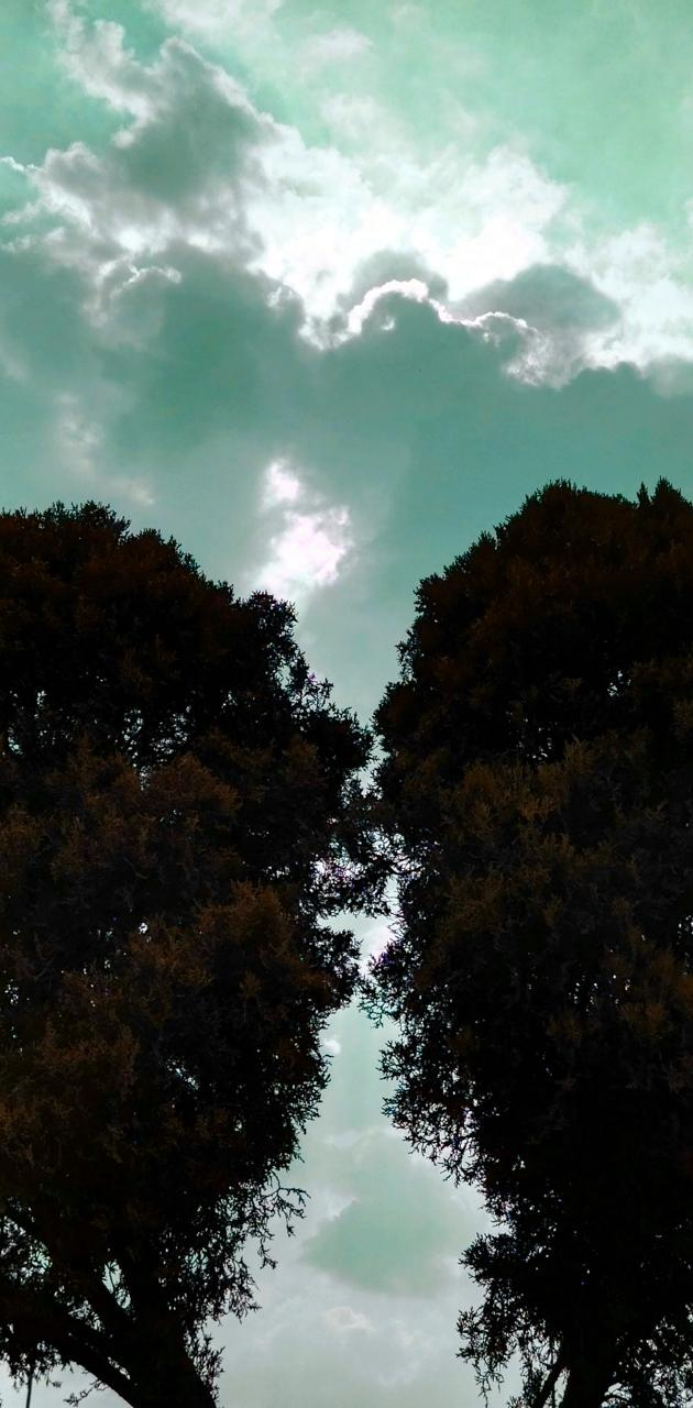 Tree wings