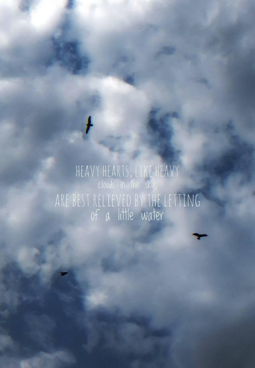 bird within Sky