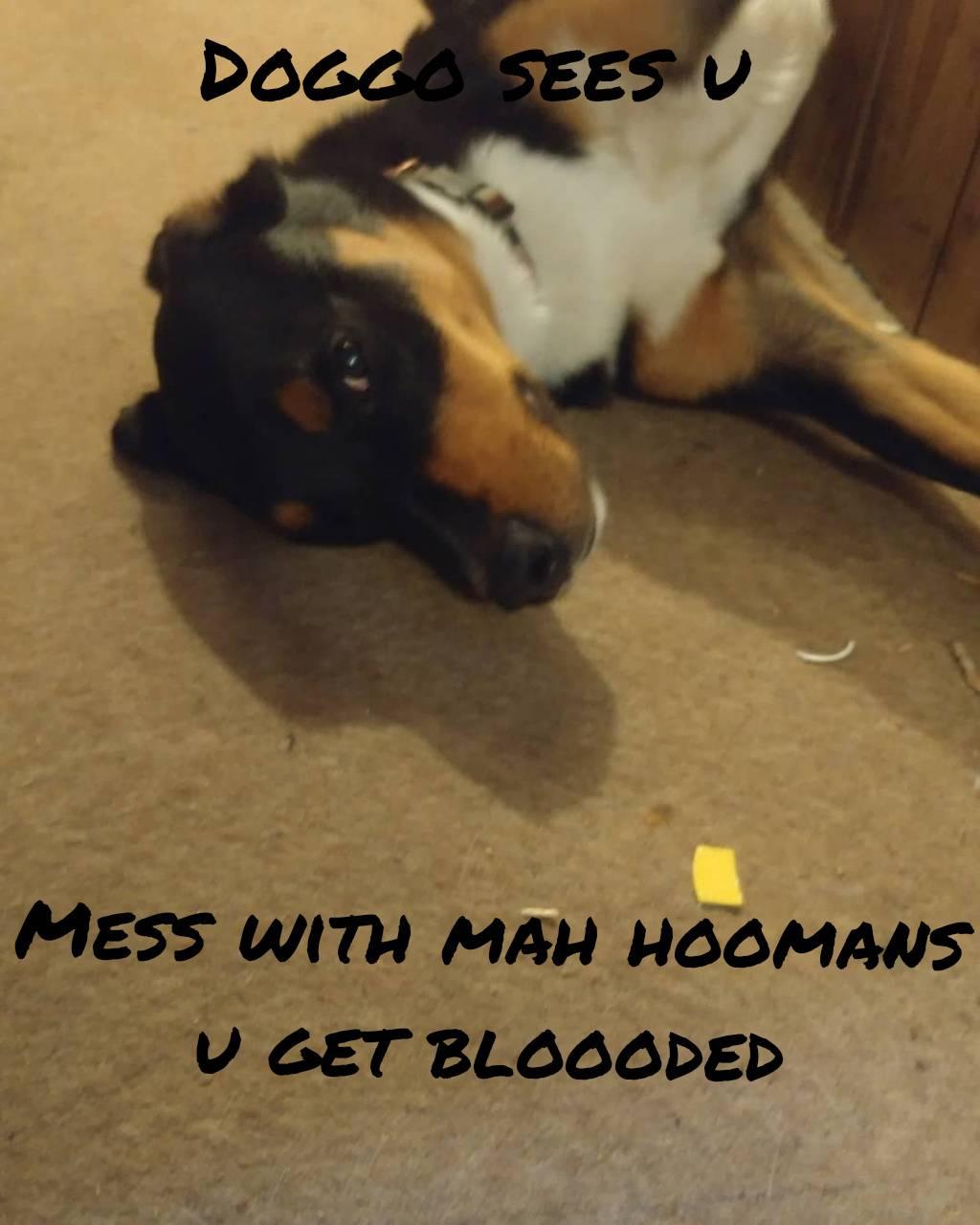 My dogs meme