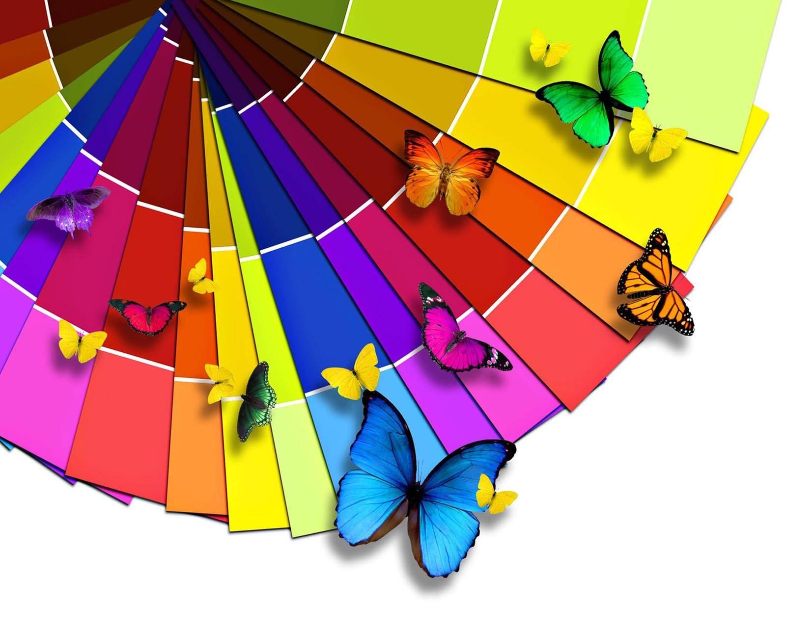 Palette N Butterfly