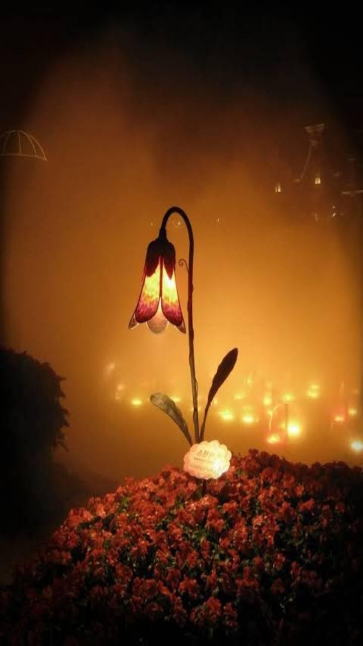 Light lily
