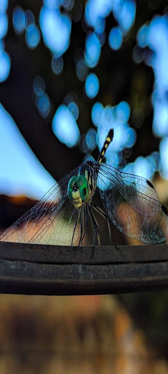 Drangon-Fly