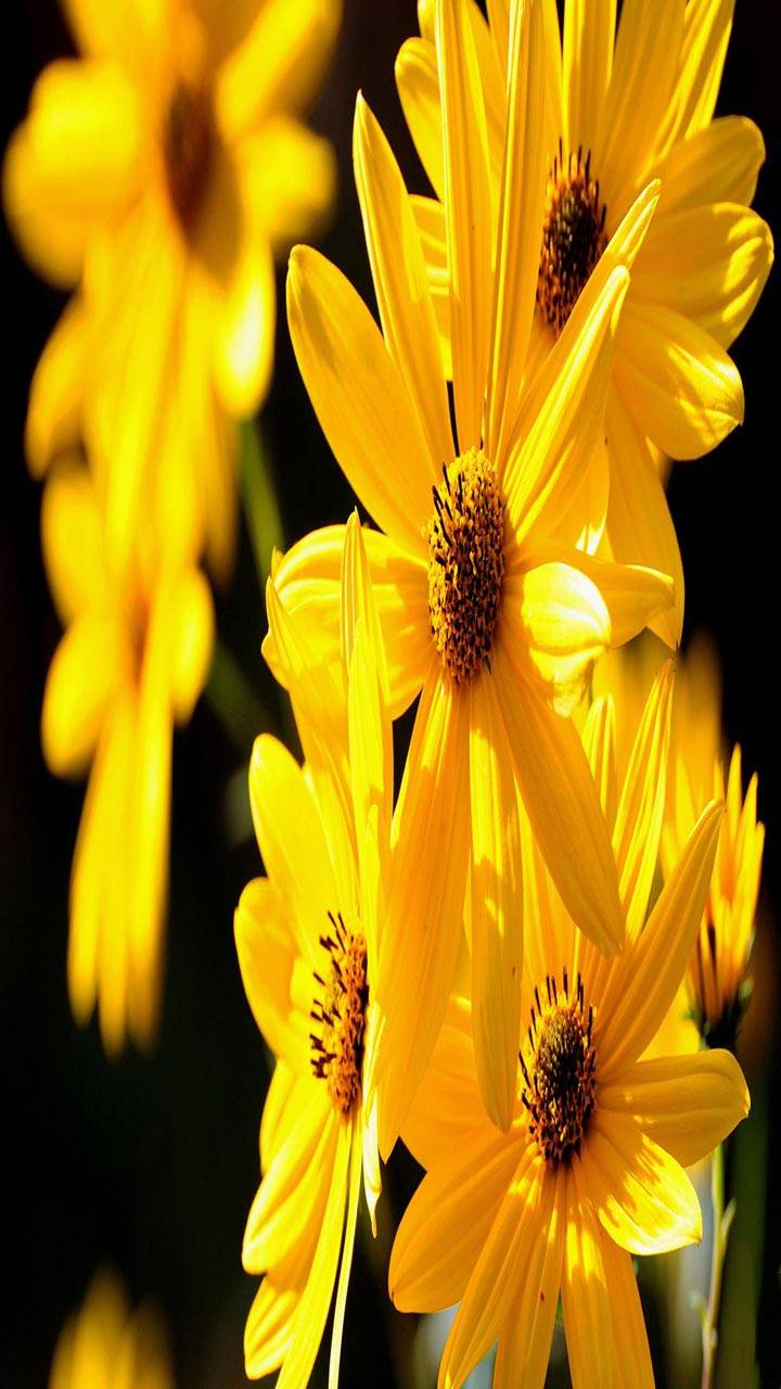 Yellow Petals Nature