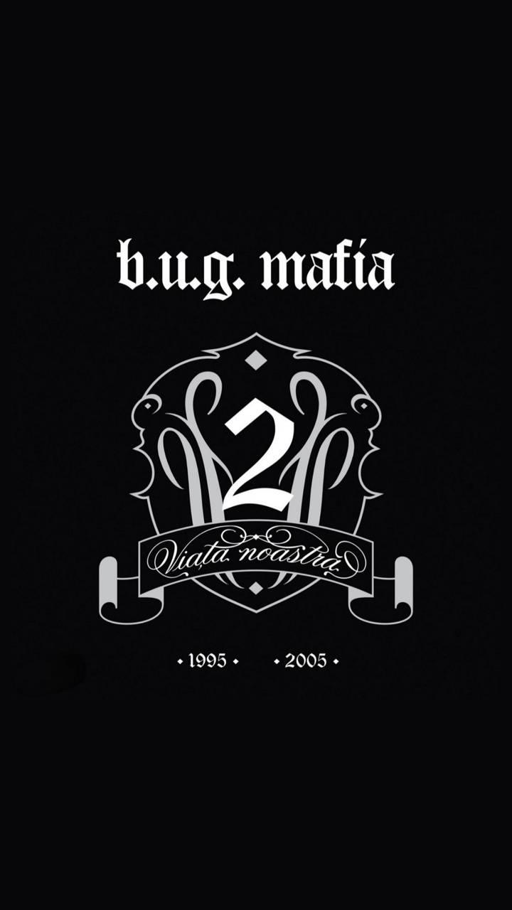 bug mafia VN2