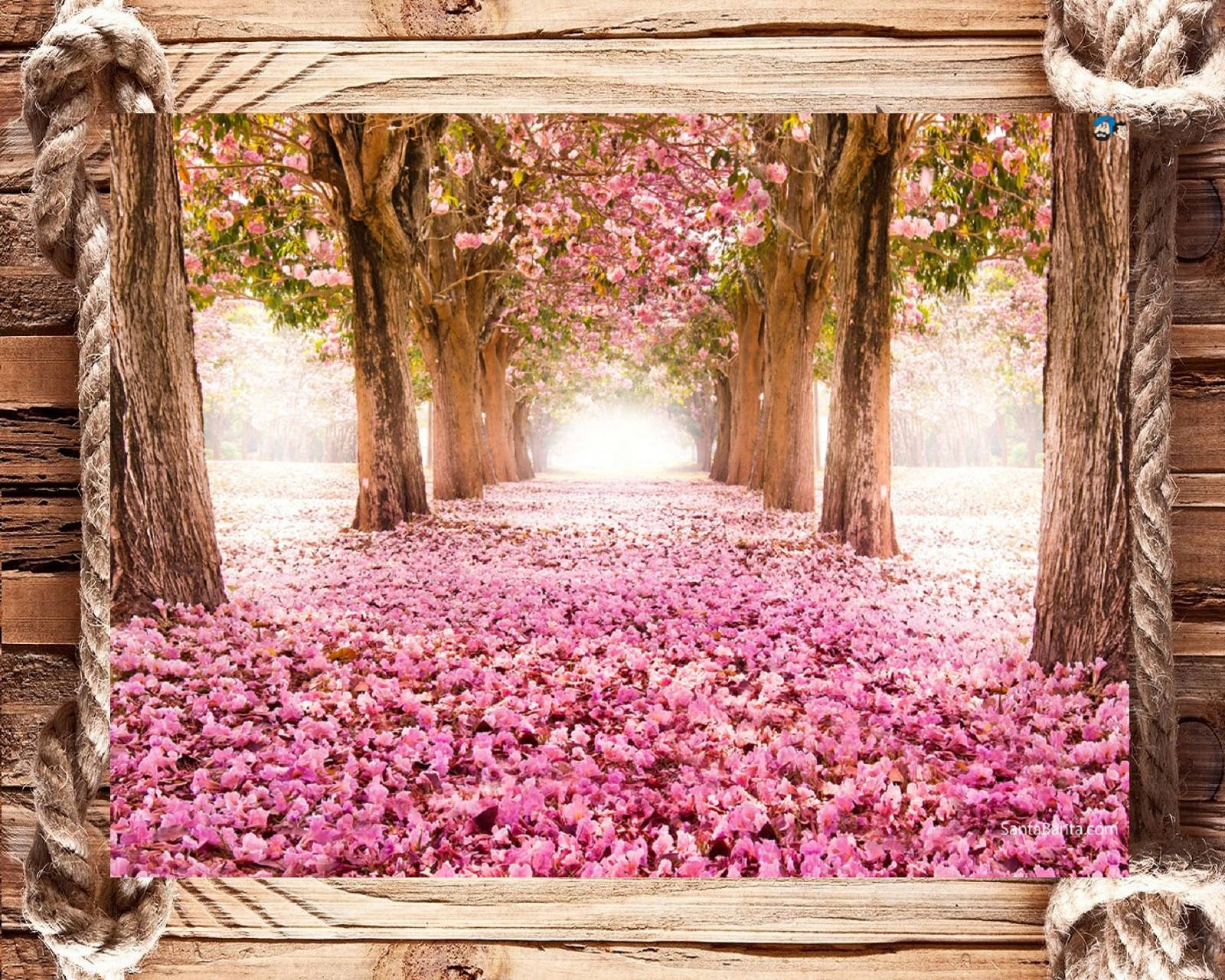 Beauty of blossoms