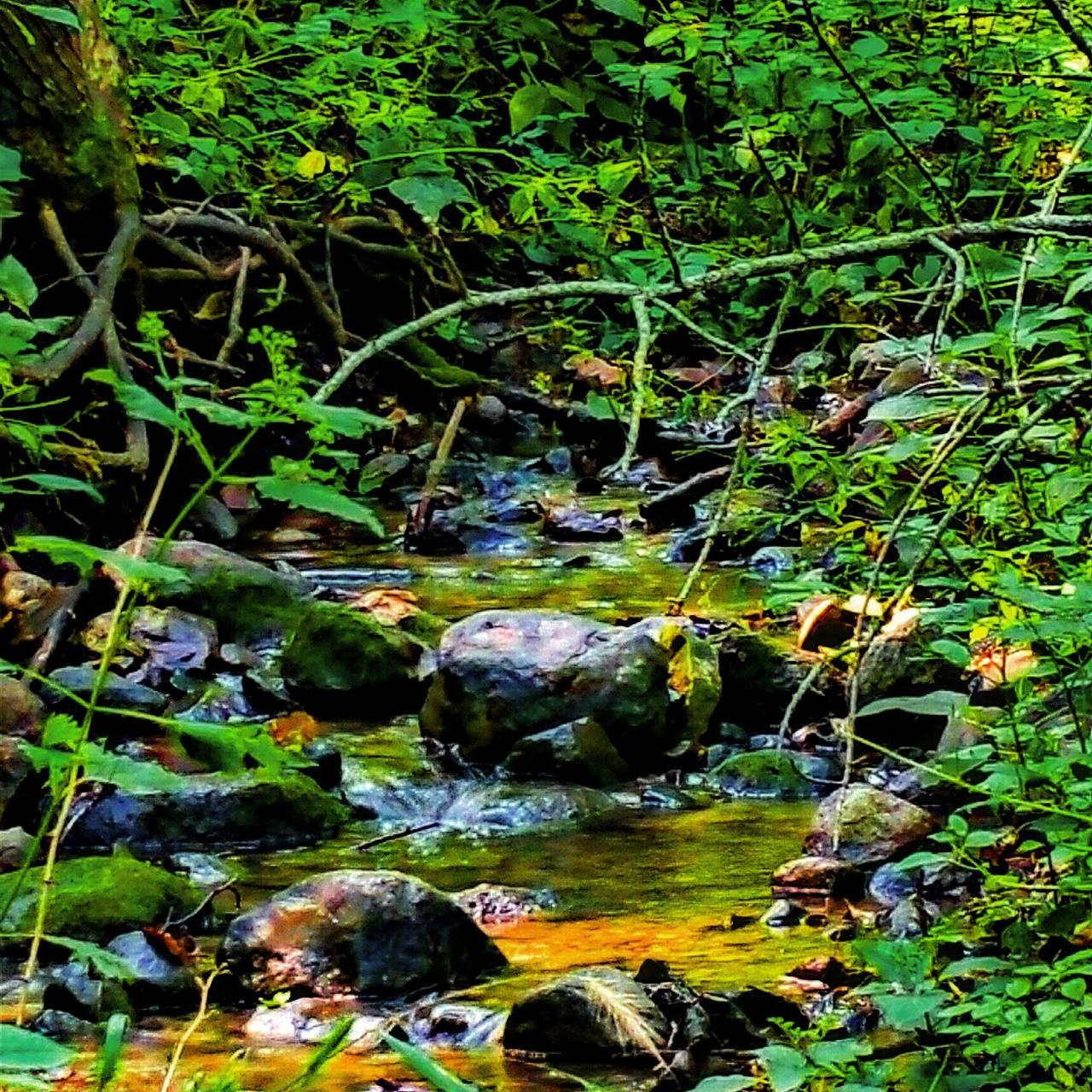 Zen Forest Stream