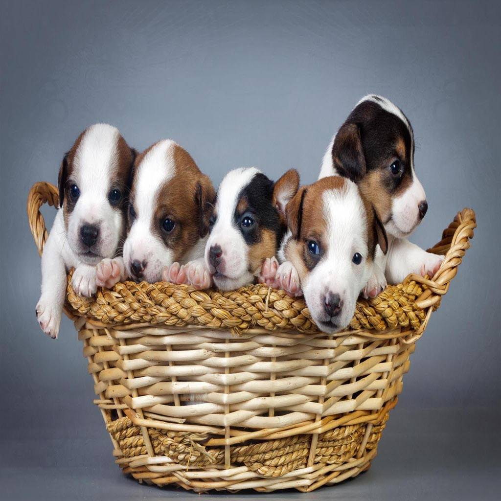 Puppies basket