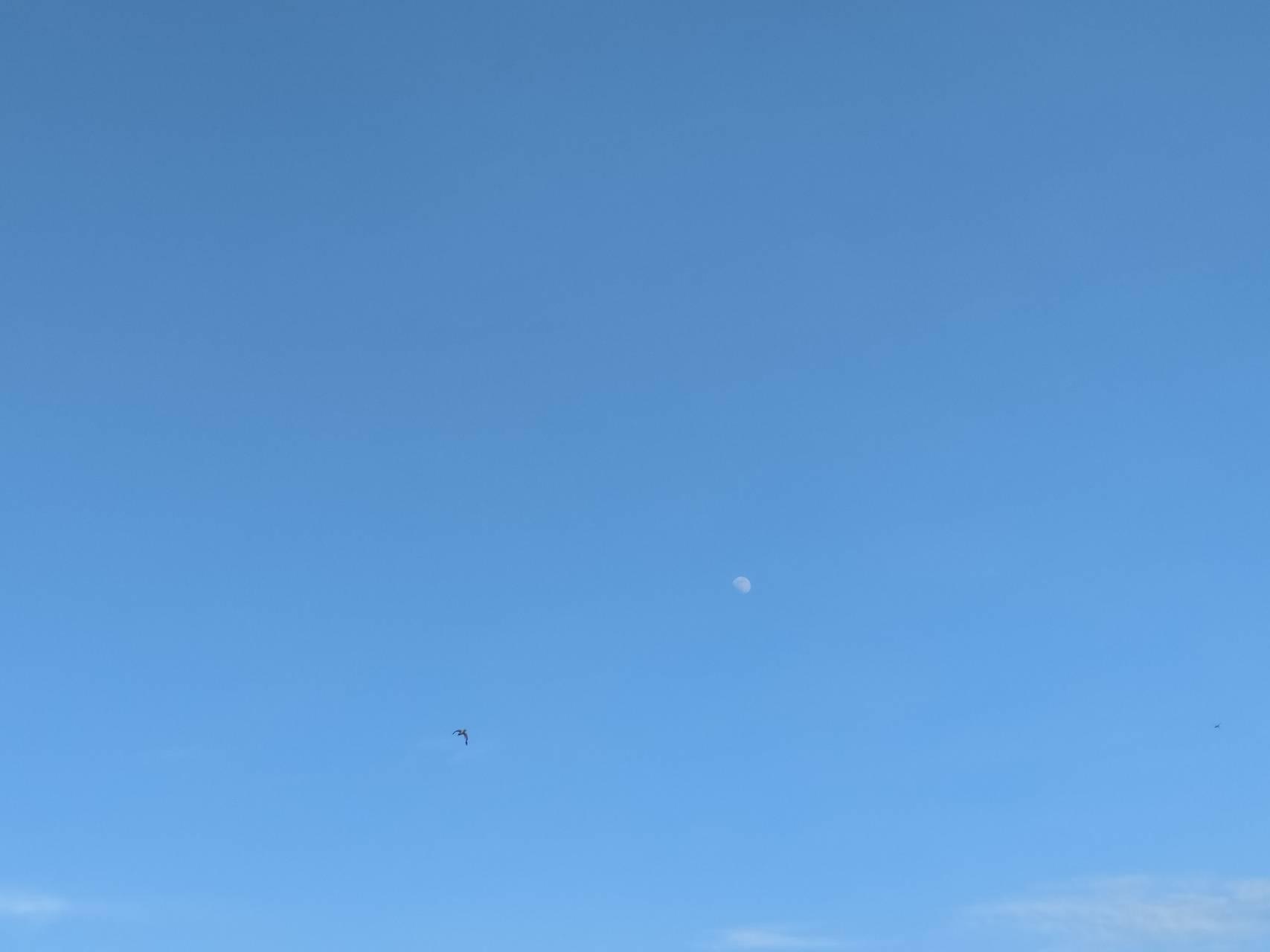 Half Moon day