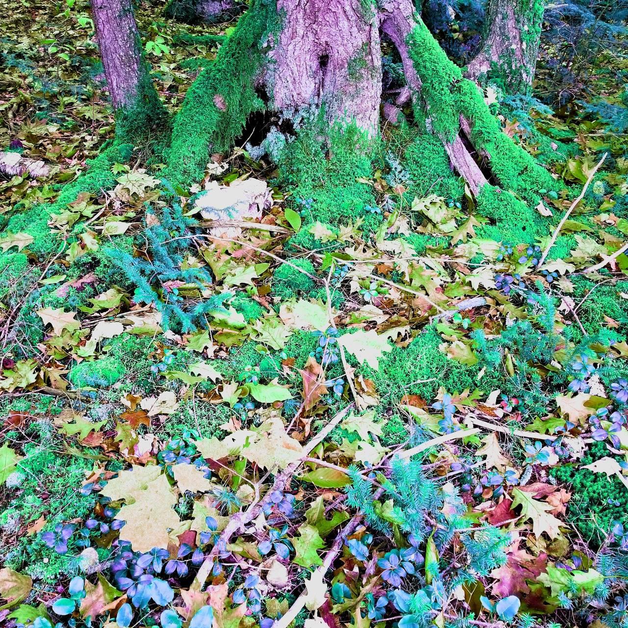 Moss of Earth