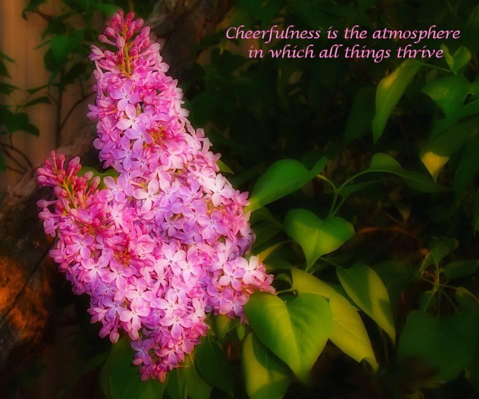 Cheerfulnes