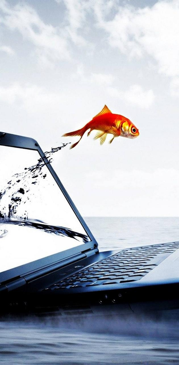 Laptop fish