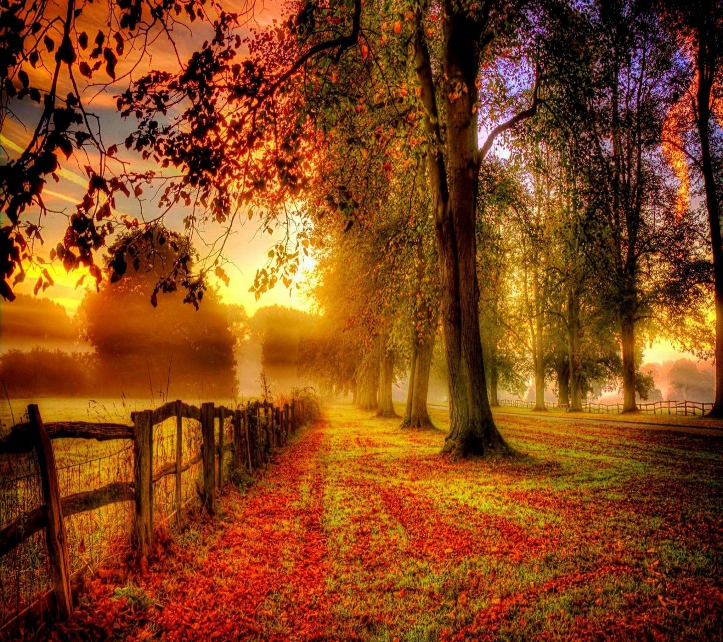 nice Park wallpaper by Mr__Wanted - e2 - Free on ZEDGE™
