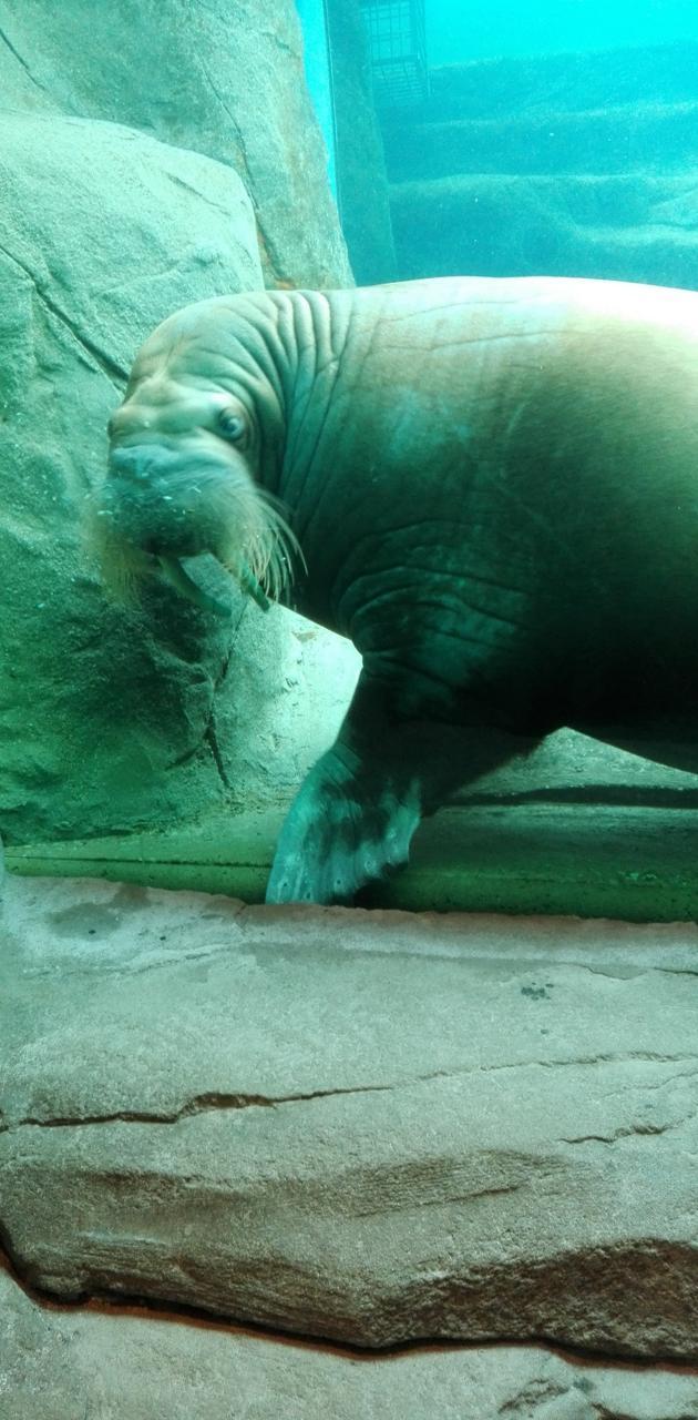 Sea Lion Jolien