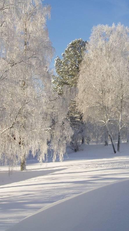 Cold Winter 3