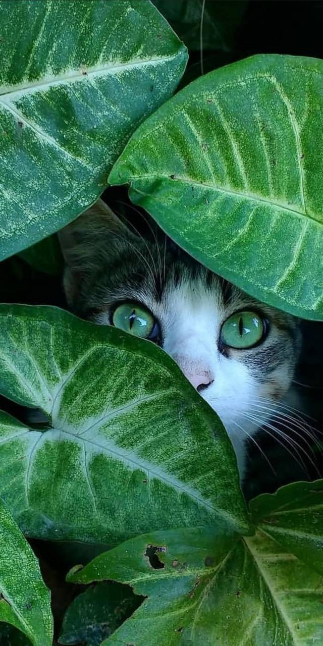 Cat in the plants