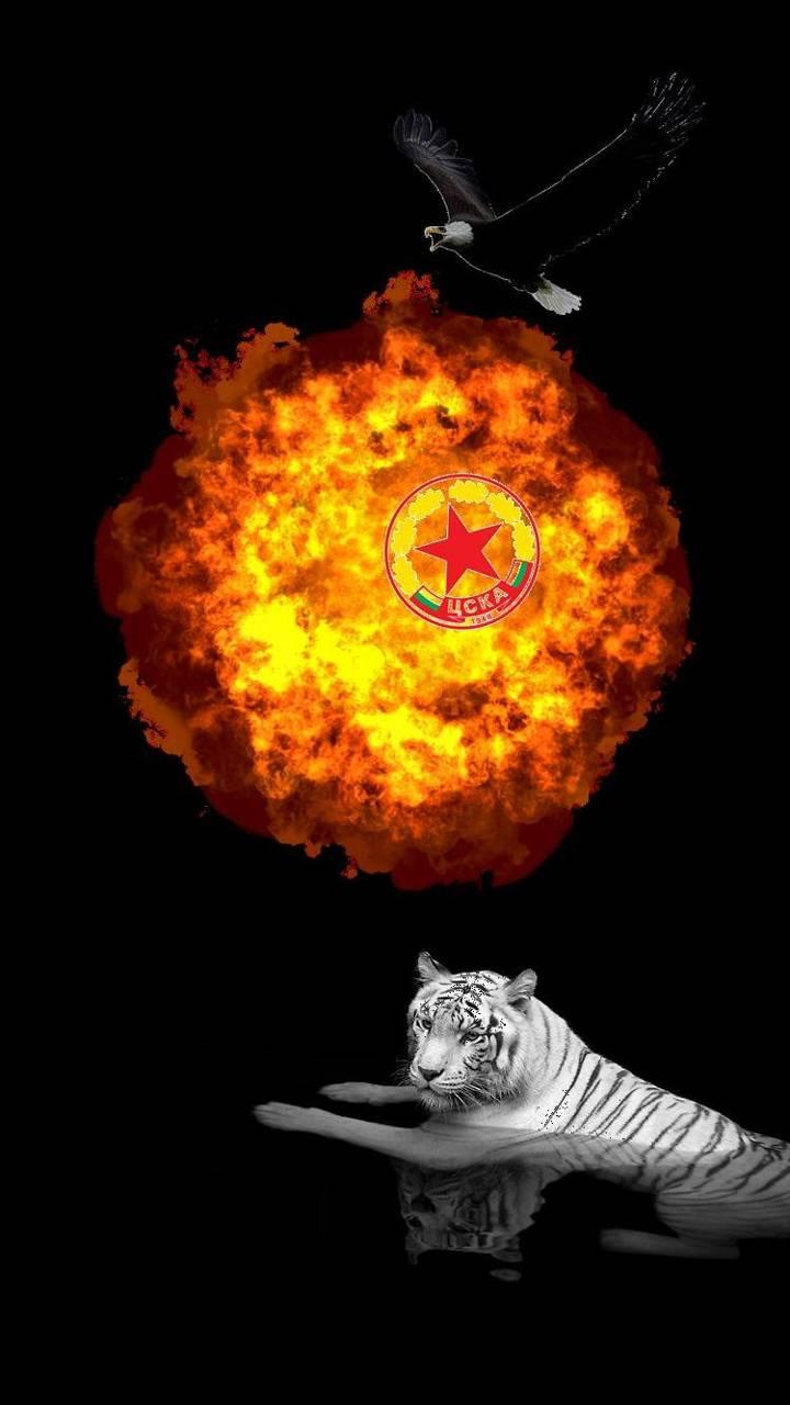 cska tiger
