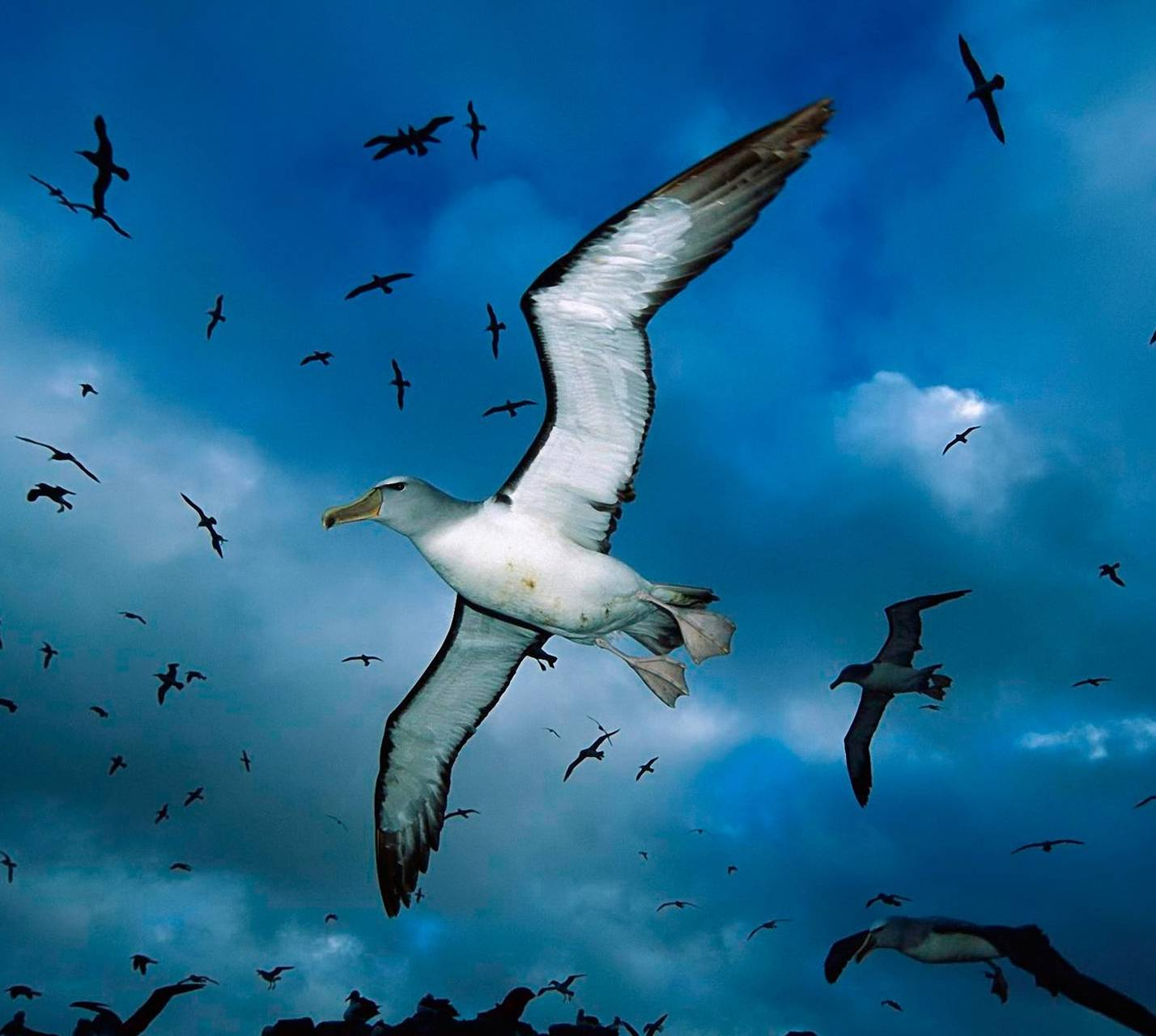 Seagulls Flock Wallpaper By Isultaani Bc Free On Zedge