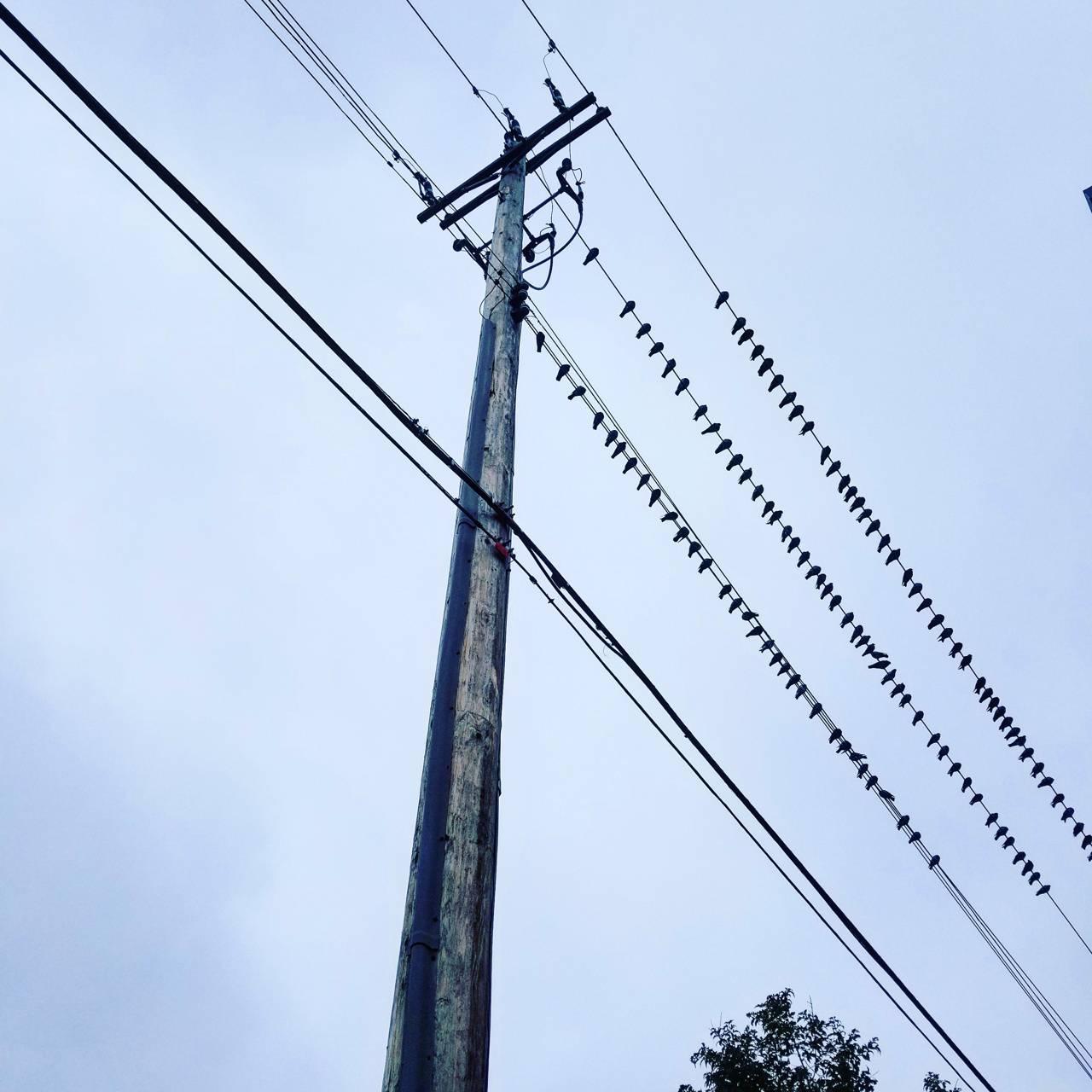 Birds On A Wire Wallpaper By Spschultz78 Ee Free On Zedge