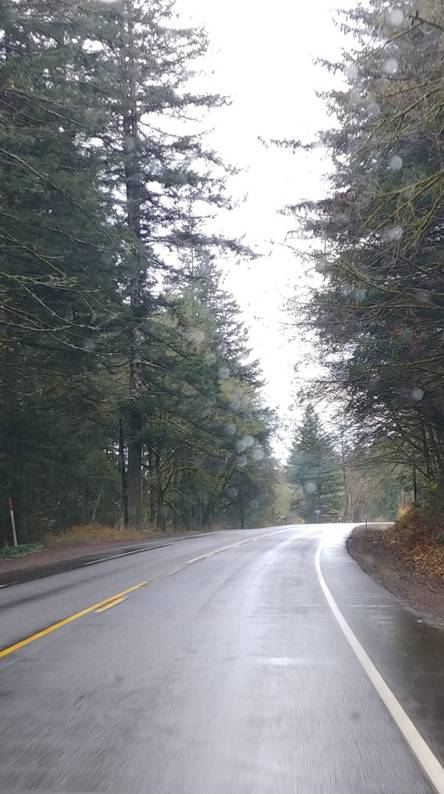 Rainy Forest Road