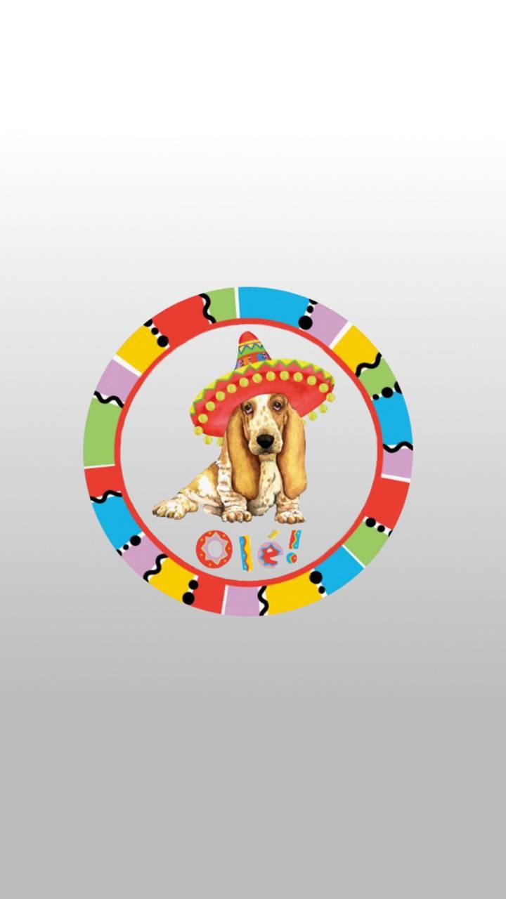 Basset Fiesta