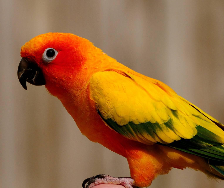 Cute Birdy
